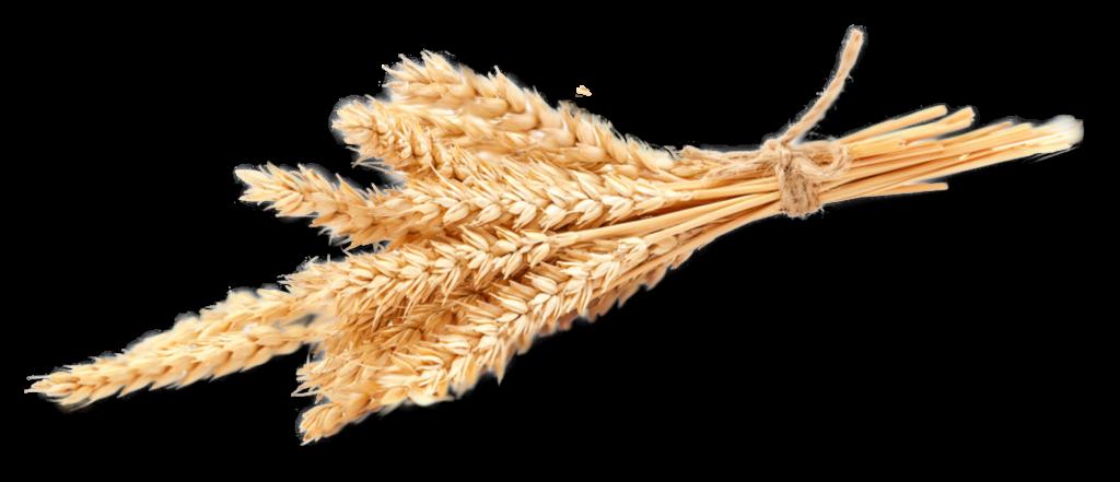 Farma Trhlíkovi | Pšenice a ječmen - Tučapy u Holešova